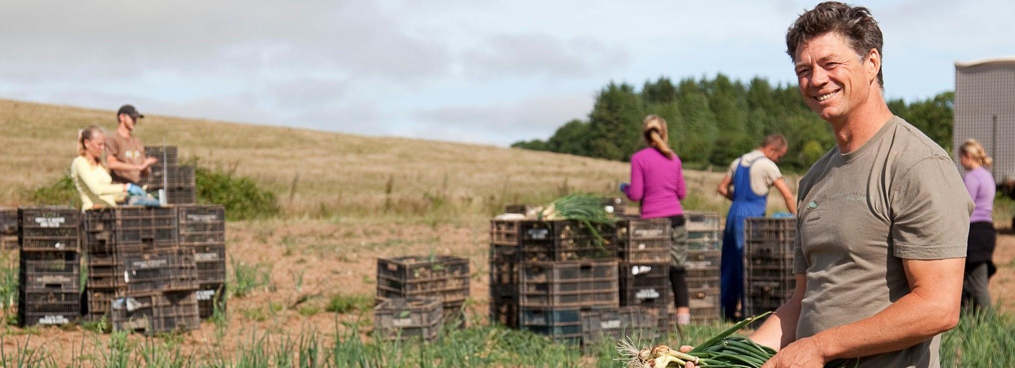 Working at Riverford Farm